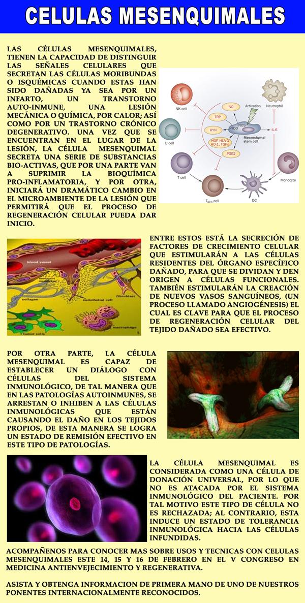 CELULAS-MESENQUMALES